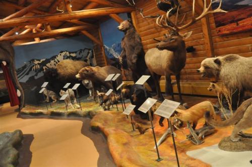 MacBride Museum taxidermy (9)