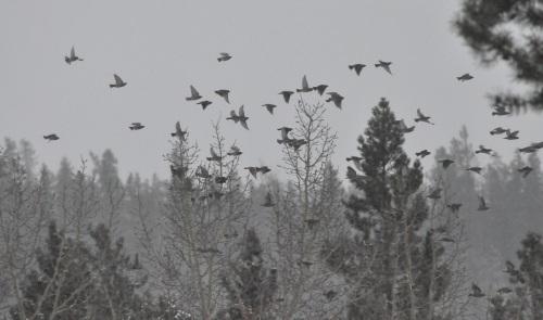 small birds2