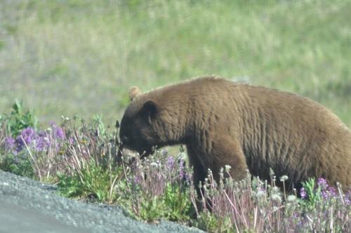 bear2014