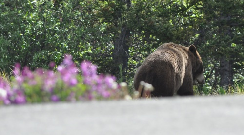 bear_flowers