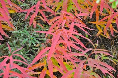 fall_2014_2