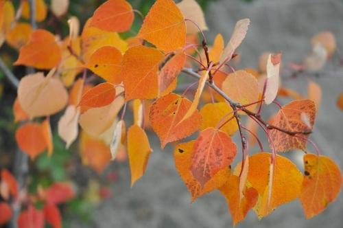 fall_2014_6
